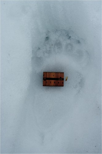 Karu jäljed ©Nahkanuia