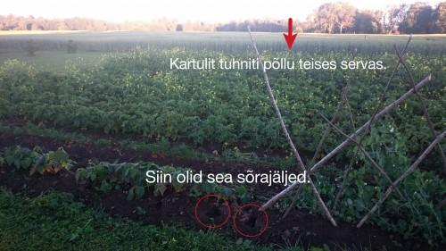 Sead kartulis @Nahkanuia